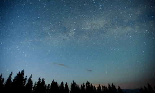 Starry sky with trees